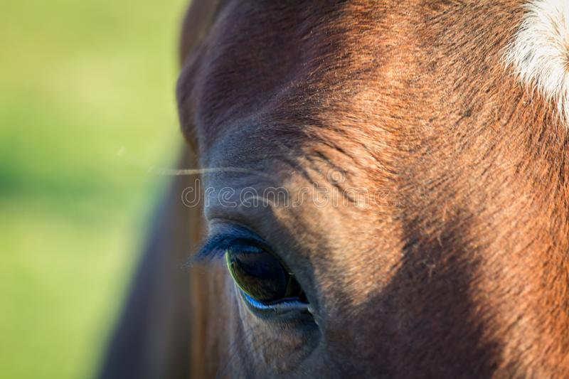 Detail of horse eye with blured background.  stock photography