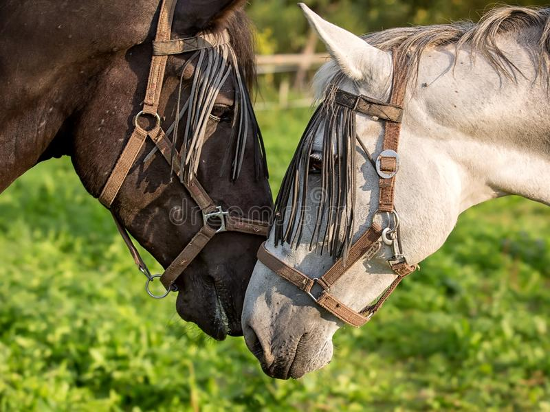 Download Detail of horse head stock photo. Image of grass, detail - 26353194