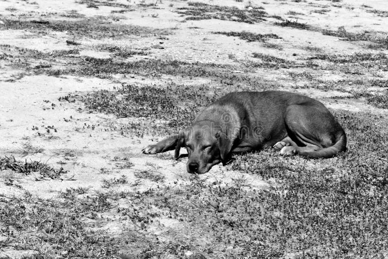 Hungry stray dog wait someone give food on dirty ground in black and white photography royalty free stock photo