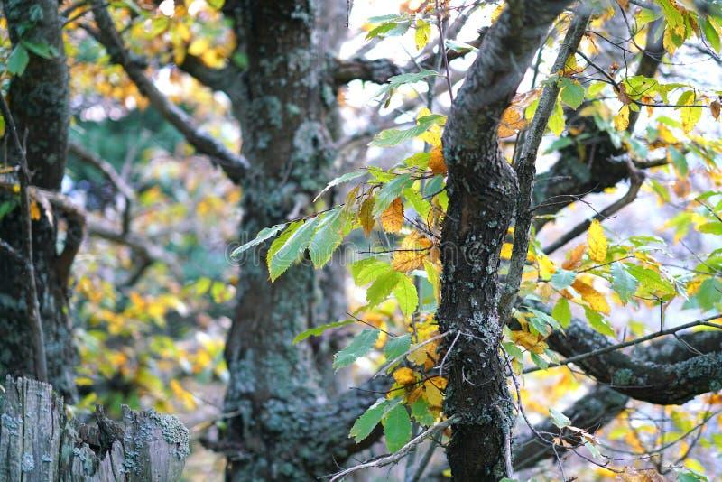 Detail im Herbst des Gebirgswaldes in Euboea stockbilder