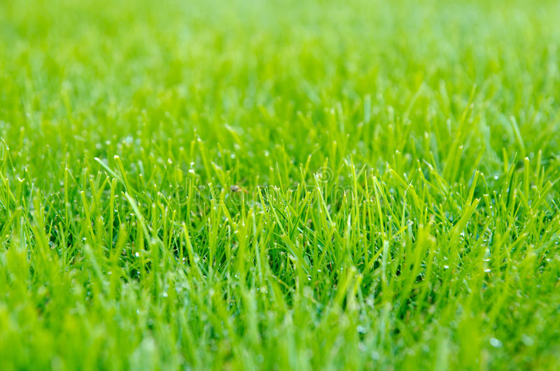 Detail of lawn. Lawn detail with shallow DOF stock images