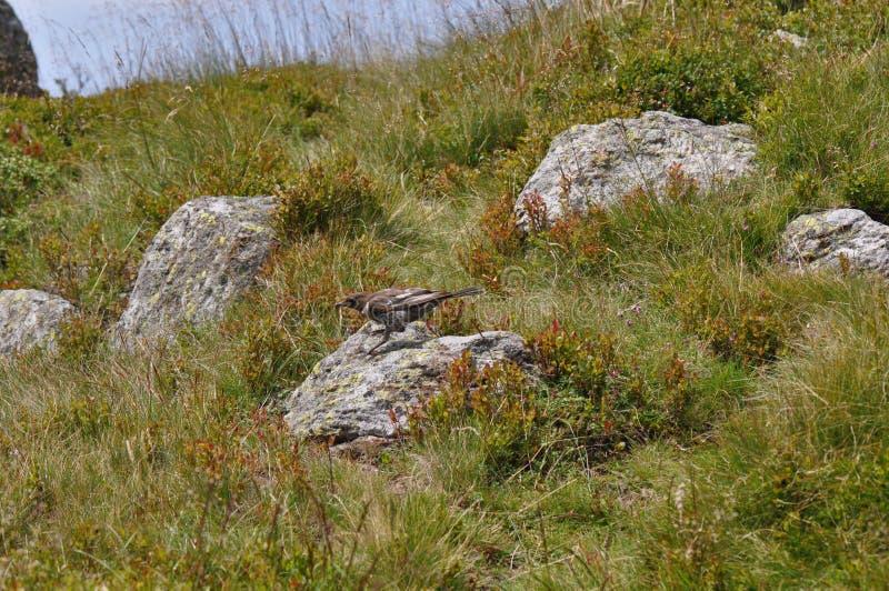 Little bird and mountain rocks royalty free stock photo