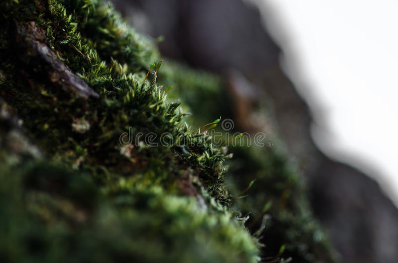 Detail of moss and sunlight with bokeh royalty free stock photo