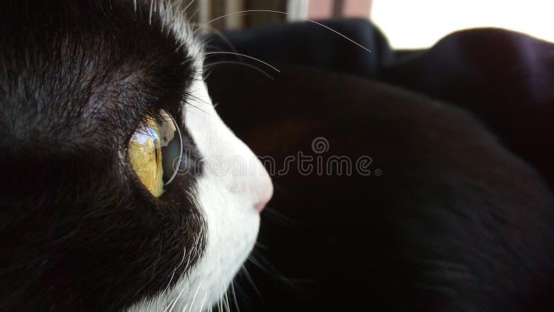 Detail of my cat`s eye.  stock photo
