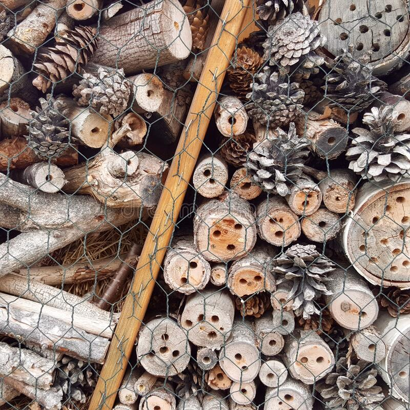 Free Detail Of An Insect Hotel Made Of Wood Stock Image - 184777241