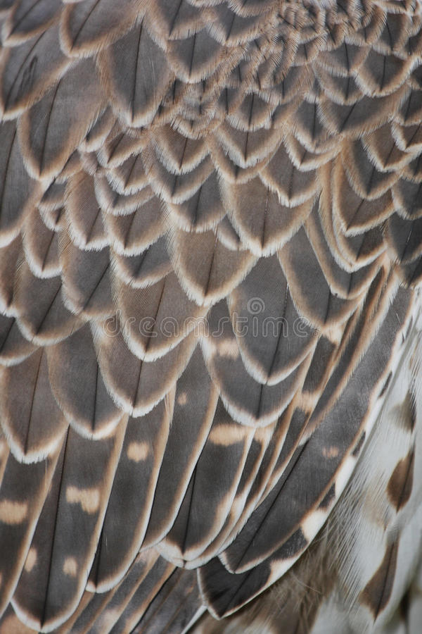 Free Detail Of Bird Feathers Royalty Free Stock Photo - 30794795