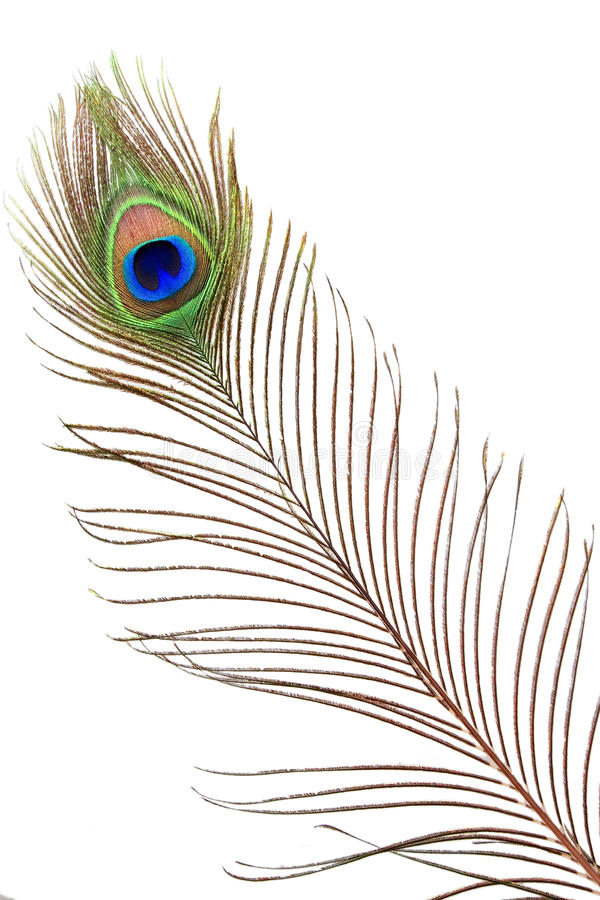 Free Detail Of Peacock Feather Eye Stock Photography - 19794622