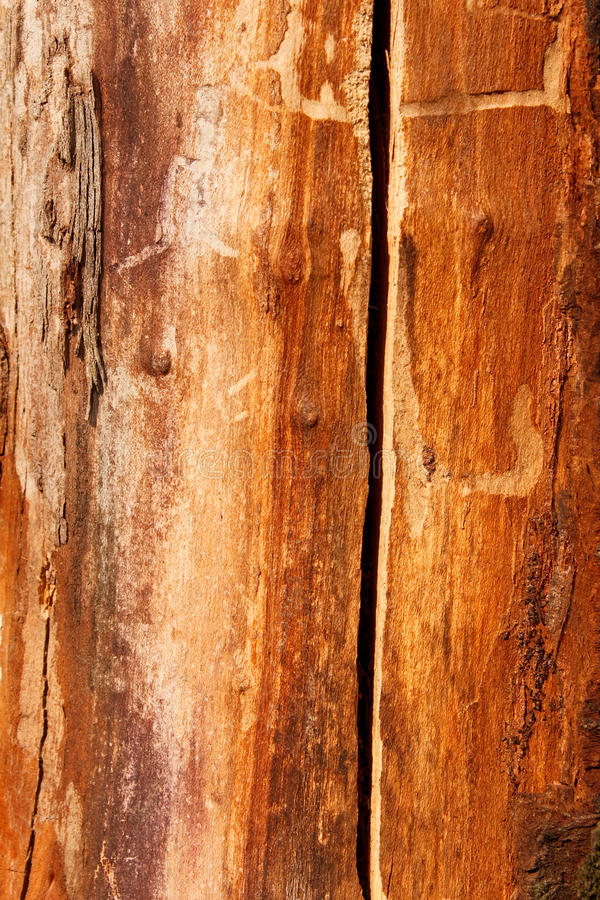 Detail of an old dried cherry tree trunk royalty free stock images