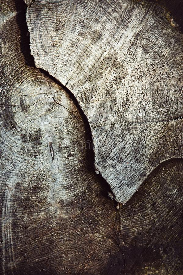 Detail of an old stump sawn stock photos