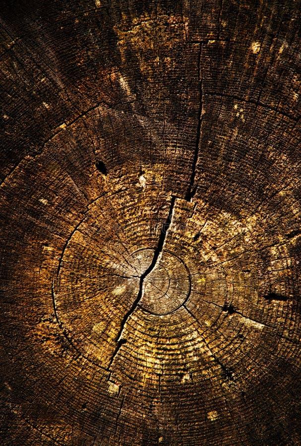 Detail of an old stump sawn stock image