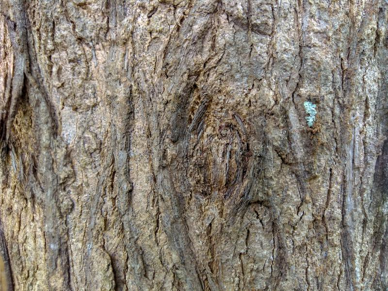 Detail old tree skin texture, Nature and tree stock images