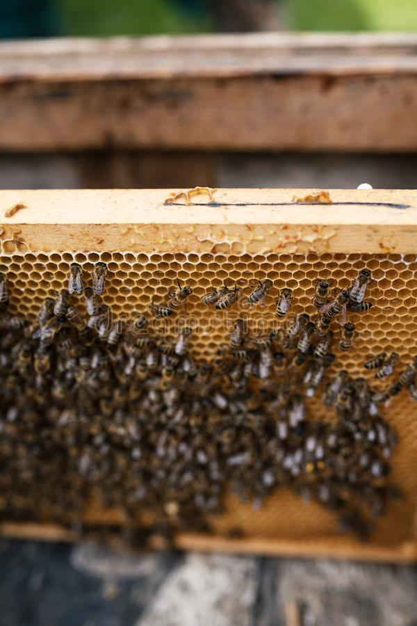 Detail op een honing op honingraten Concept imkerij stock foto's