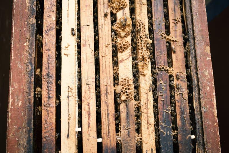 Detail op een honing op honingraten Concept imkerij royalty-vrije stock afbeeldingen