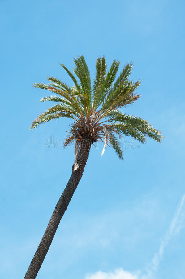 Download Detail Of A Palm Stock Images - Image: 34493814