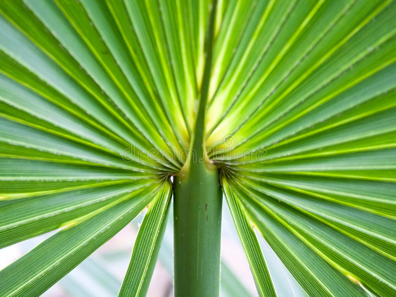 Detail of Palmetto Frond Pattern. A closeup shot of a palmetto plant shows and intersting pattern royalty free stock photo