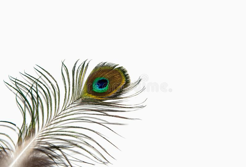 Detail of peacock feather eye on white background. Isolated. stock images