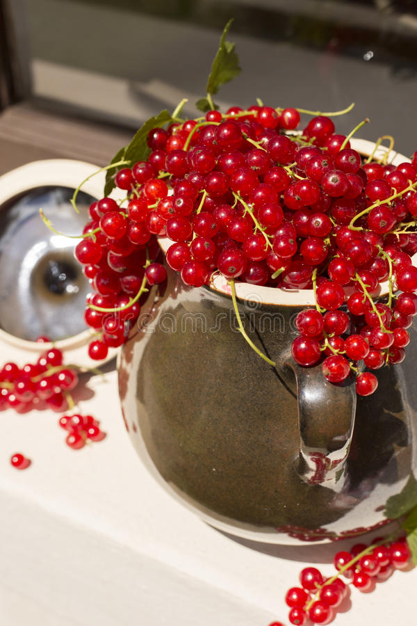 Detail of Pitcher/jug of redcurrant on a direct sunlight on a window royalty free stock photography