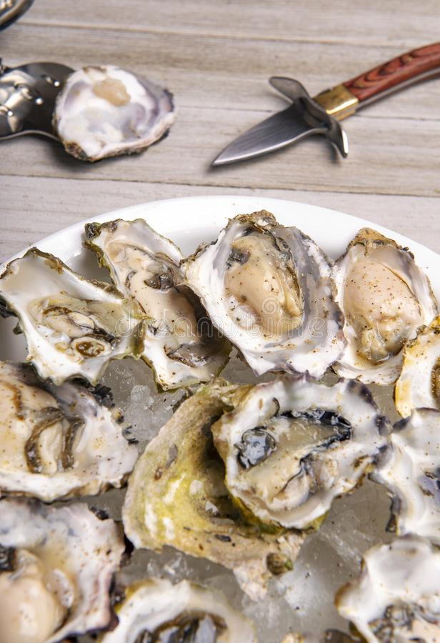 Fresh shucked oysters plate over wood background stock images