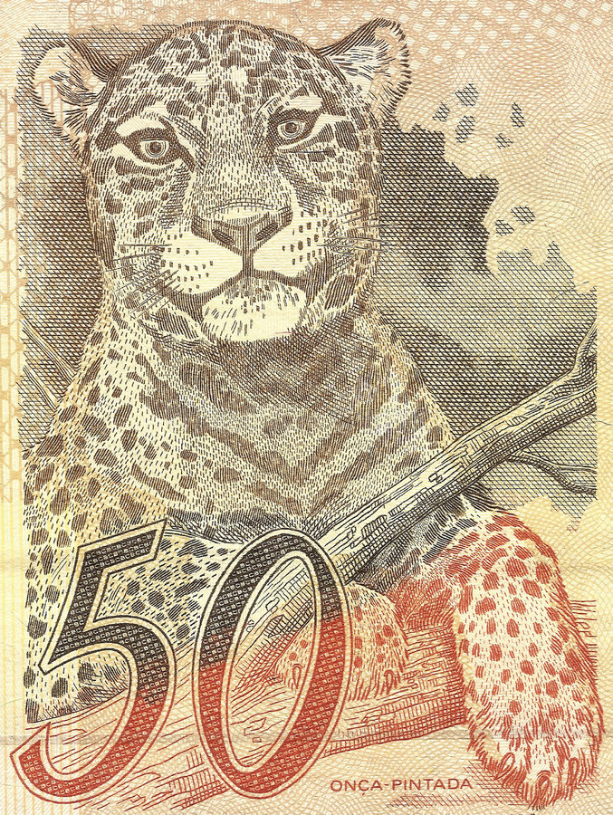 Detail realer Banknote 50 von Brasilien lizenzfreie stockbilder