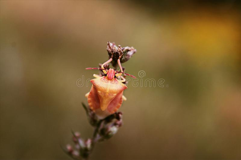 Download Detail of red beetle stock photo. Image of floral, background - 117494088