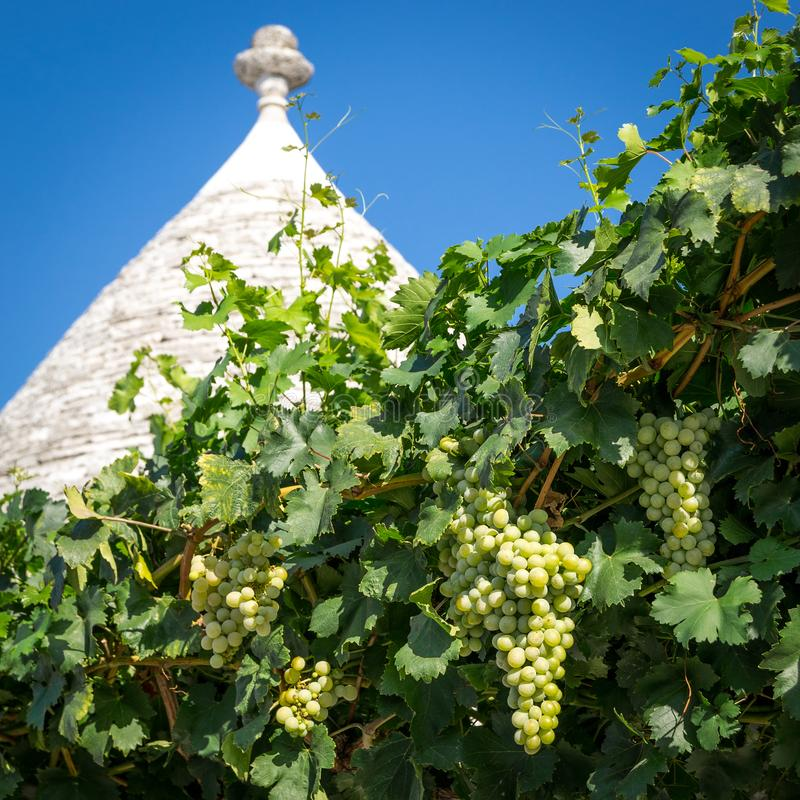 Detail of the roof of a typical trullo with grapevine in Alberobello Italy. royalty free stock image