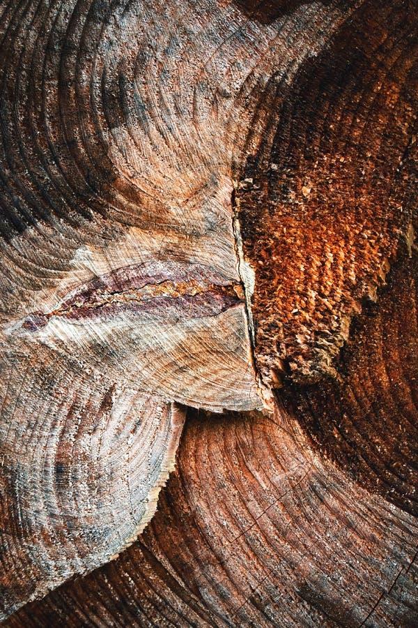 Detail of sawn rotten stump royalty free stock image