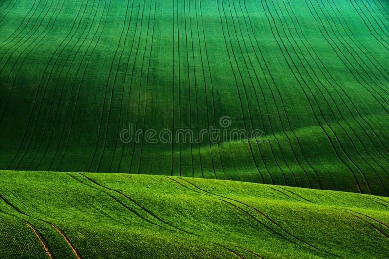 Detail scenery at South Moravian field during spring, Czech republic. royalty free stock photos