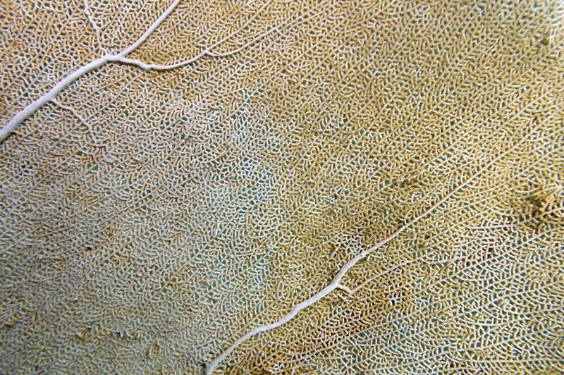 Detail of a sea fan royalty free stock images