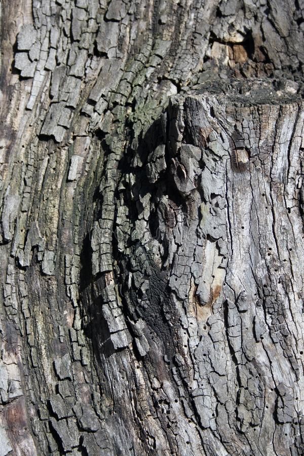 Detail of secular tree bark. The perfect light highlights all the details of the texture. Excellent timber background for creative projects stock photography