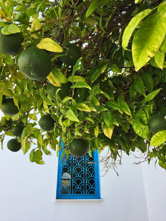 White Church, Blue Window and Green Orange Tree, Greece stock image