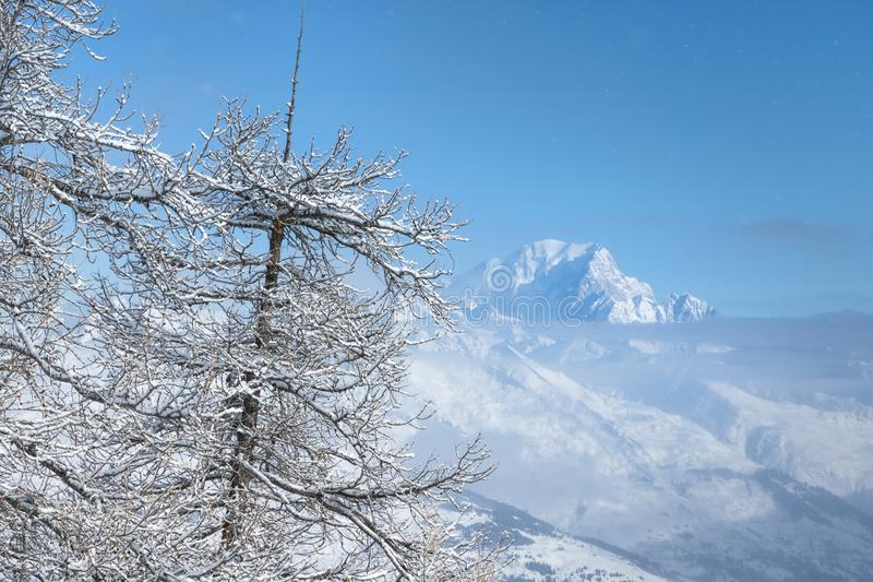 Detail of snow covered tree branches and Mont Blanc mountain. Above clouds royalty free stock images