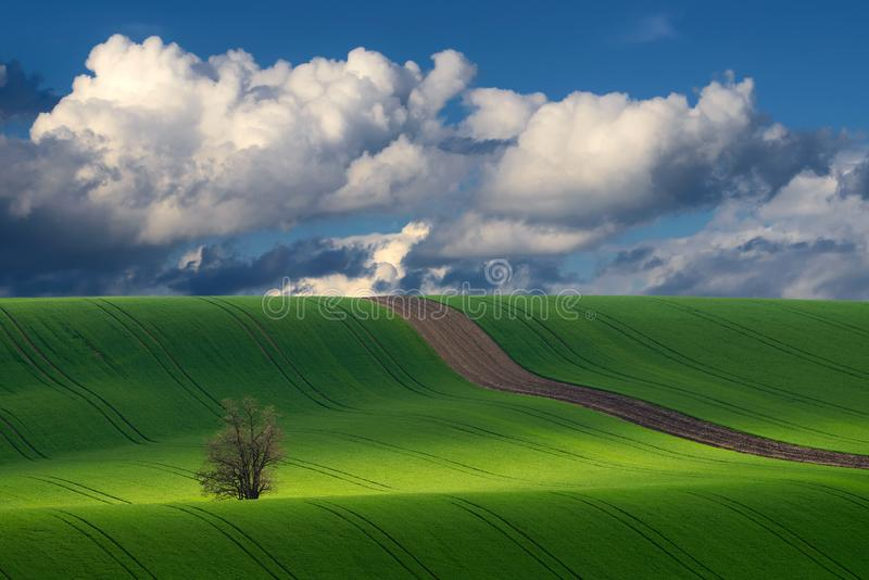 Detail of South Moravian field, Czech republic stock photography