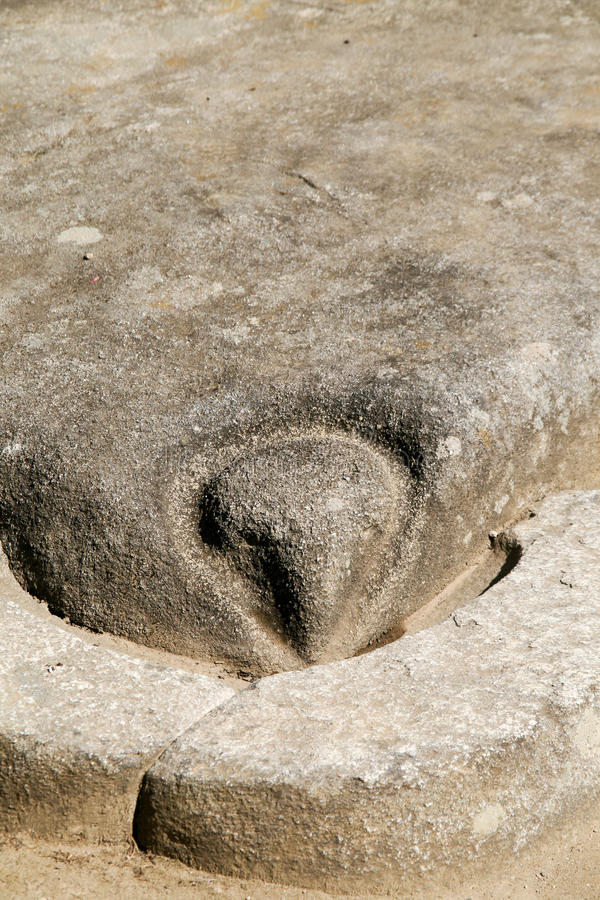 Detail - the stone head of condor royalty free stock photo