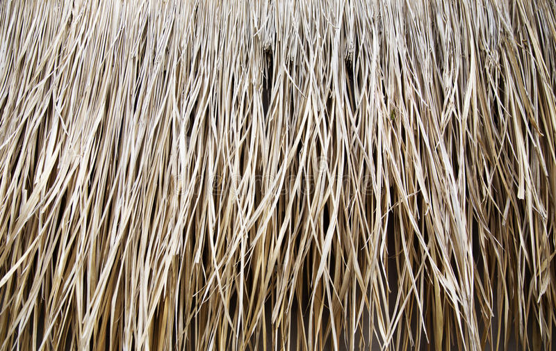 Detail of straw roof at the house stock photography
