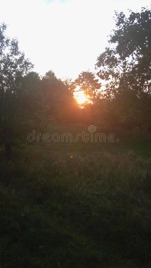 Sunrise in garden royalty free stock images