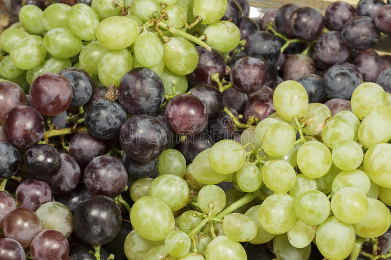 Detail of tray with different kinds of table grapes freshly harvested. Tray with several varieties of table grapes recently harvested, with different flavors stock images