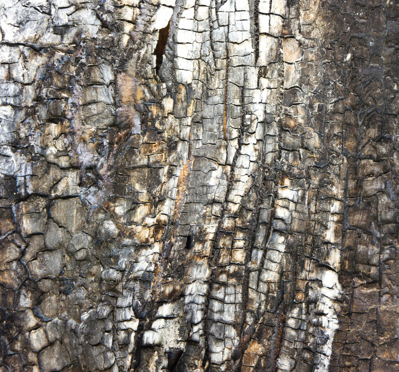Download Detail of tree after fire stock image. Image of bonfire - 25407283