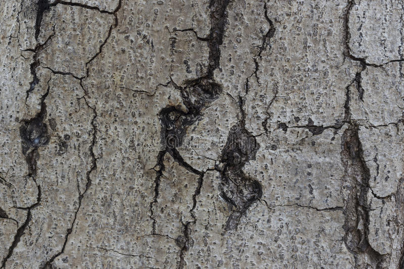 detail treen arkivfoton