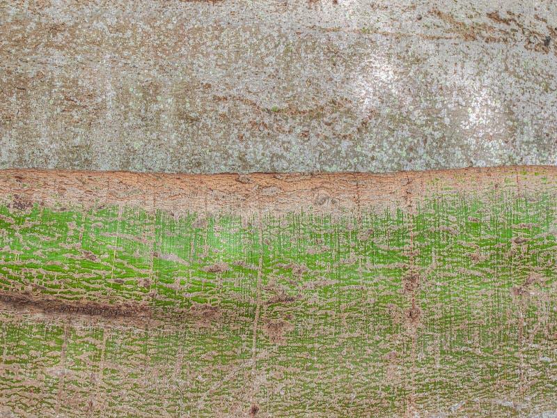 Kapok Tree Detail. Detail of the trunk of a large Kapok tree Ceiba pentandra in Miami, Florida stock photos