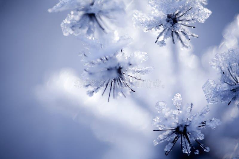 Detail van bevroren bloem stock afbeeldingen