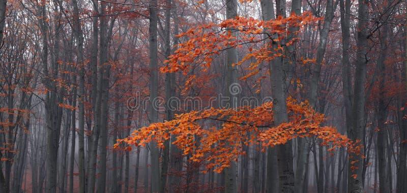 Detail van boom en rode bladeren in mistig bos tijdens de herfst royalty-vrije stock afbeelding