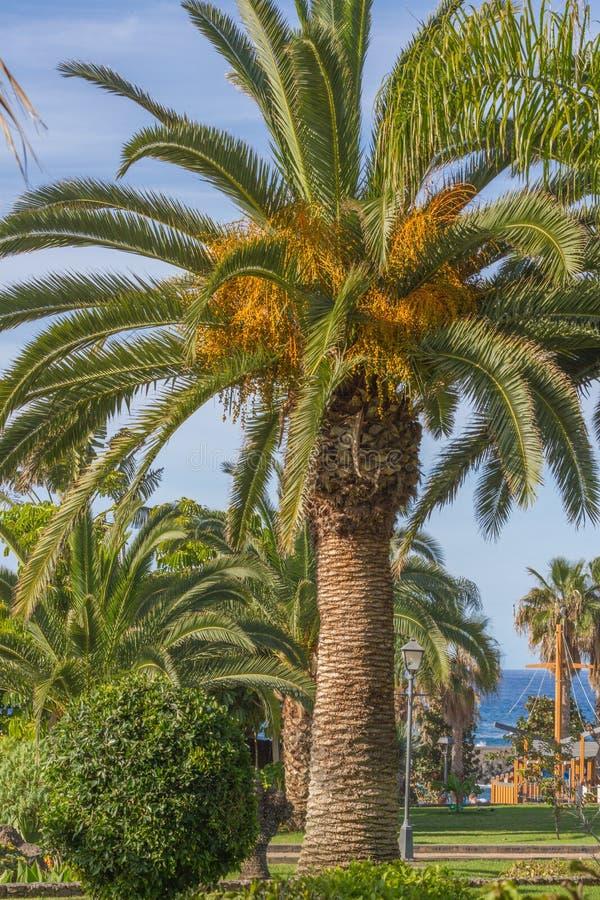 Detail van data op palm stock afbeelding