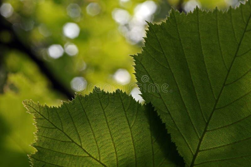 Detail van de bladeren in backlight royalty-vrije stock afbeelding