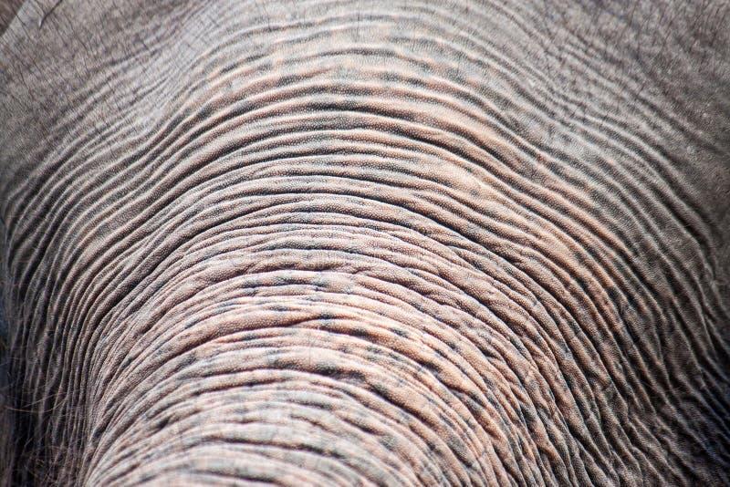 Detail van de boomstam van een olifant stock fotografie