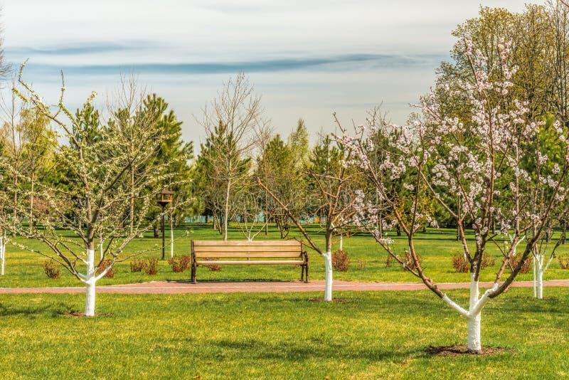Detail van een bloeiende boomgaard royalty-vrije stock foto
