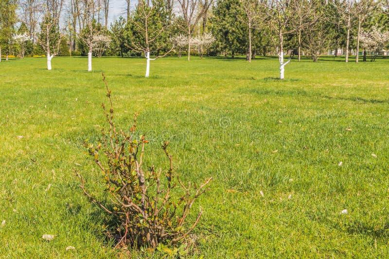Detail van een bloeiende boomgaard royalty-vrije stock afbeeldingen