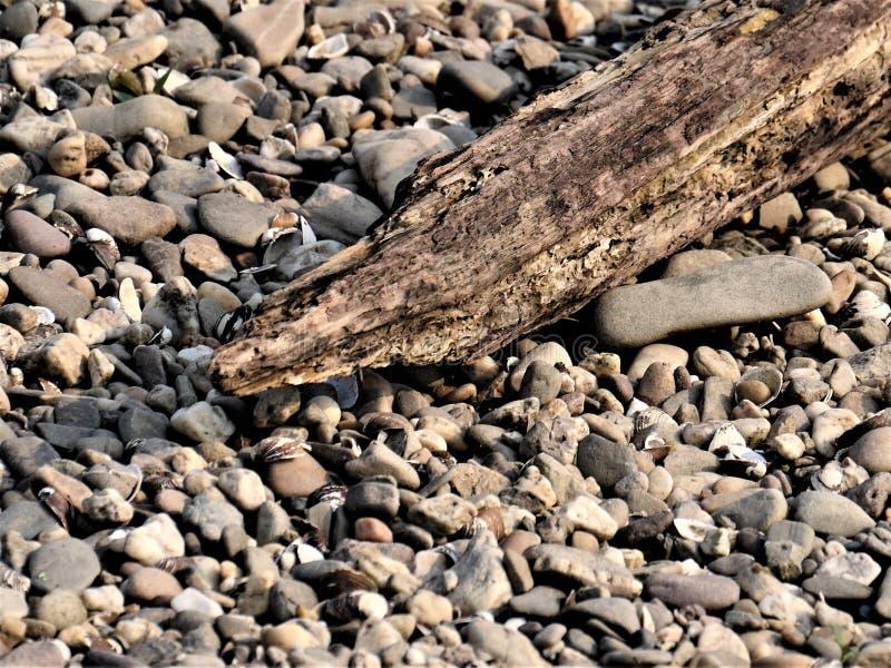 Detail van een drijfhout, vastgelopen tak van een boom op een strand van kiezelstenen Het hout is waarschijnlijk in het water voo royalty-vrije stock afbeeldingen