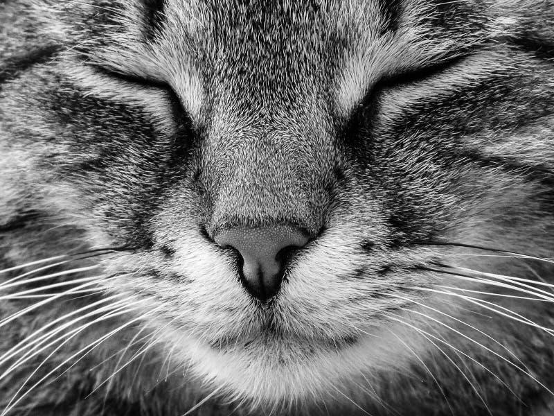 Detail van een kattenhoofd De kat is gestreepte kat, heeft gesloten ogen en rust royalty-vrije stock foto's