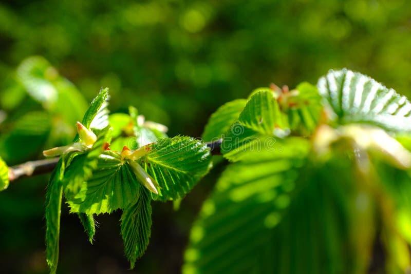 Detail van een kleine boomtak stock foto's