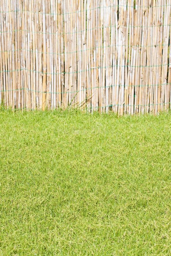 Detail van een mooi groen gemaaid gazon met lathwork stock afbeeldingen